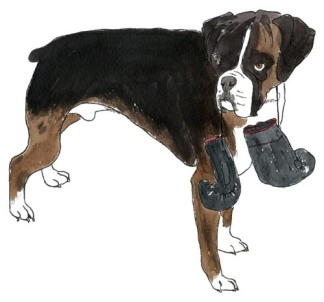 dogboxer