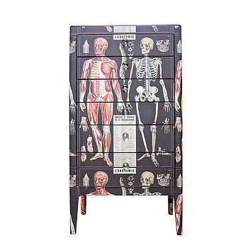 normal_anatomy-skeleton-chest-of-drawers (1)