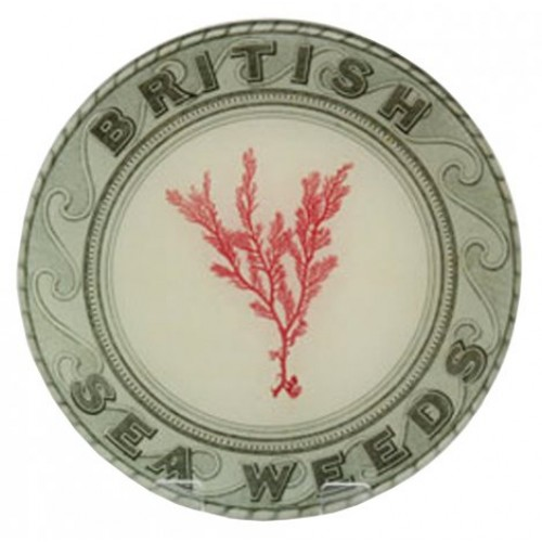 john-derian-british-seaweeds-red