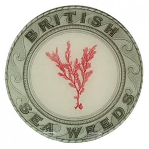 john-derian-british-seaweeds-red