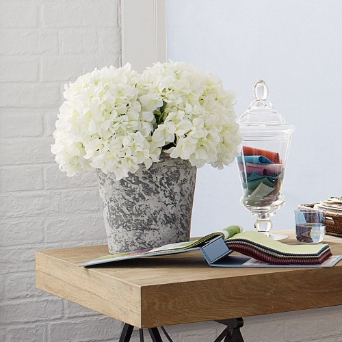 Cuthbertson and Wood white hydrangeas